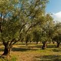 Acecasa Benizar Aceite de oliva